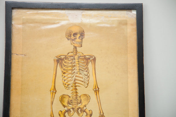 19th Century Skeleton Chart Framed - Old New House