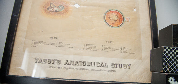 19th Century Yaggy's Anatomical Chart of the Brain - Old New House