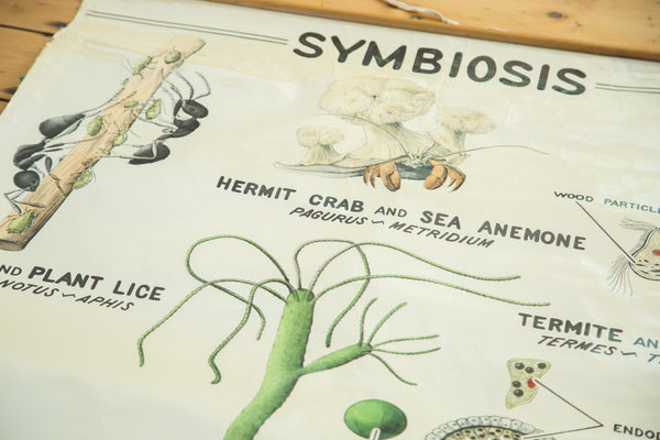 Vintage 1940s Pull Down Science Chart of Symbiosis - Old New House