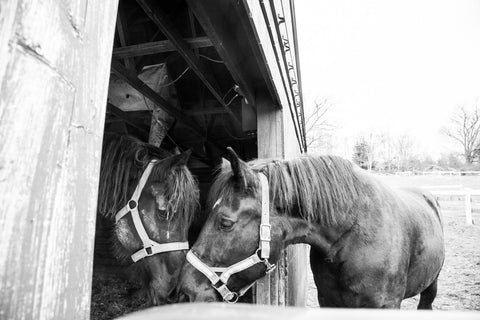 Farm Nuzzling Horse Photograph - Old New House
