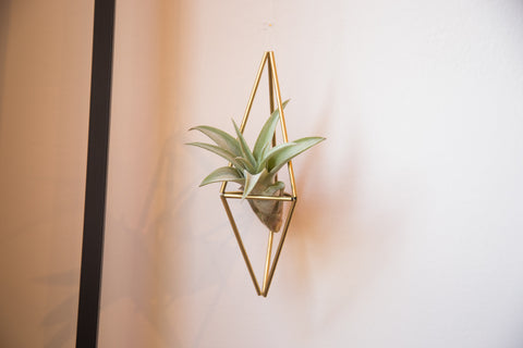 Himelli Geometric Brass Air Plant Hanger
