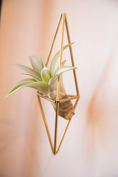 Himelli Geometric Brass Air Plant Hanger - Old New House