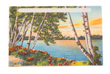 Vintage Catskills NY Postcard Birch Trees on Lake