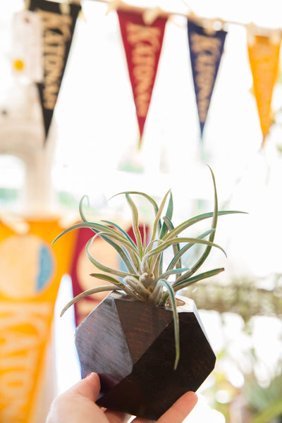 Air Plant Wooden Planter Charcoal Red