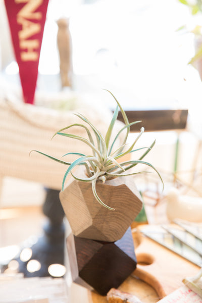 Air Plant Wooden Planter Light Grey