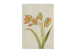 Iris Botanical Antique Watercolor Painting  / ONH Item 6666