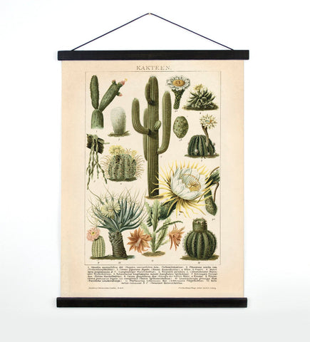 Made in USA Antique Reproduction Pull Down Chart of Cactus // ONH Item 7062