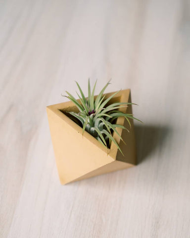 Made in USA Concrete Mini Yellow Air Plant Holder // ONH Item 8197