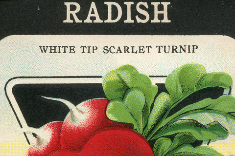 Vintage Radish Vegetable Seed Packet Birchwood Wall Art - Old New House