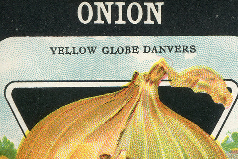 Vintage Yellow Onion Seed Packet Birchwood Wall Art