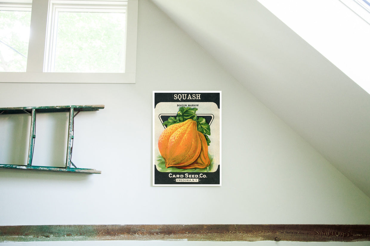 Vintage Squash Vegetable Seed Packet Birchwood Wall Art - Old New House