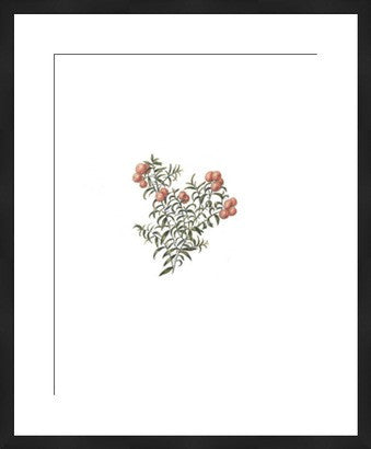 Botanical Art of Red Berries Revival - Old New House