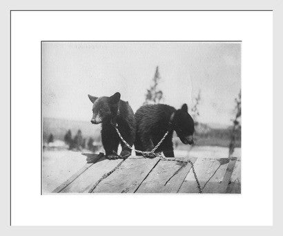 Antique Experimental Photograph Revival, Circus Baby Bears - Old New House