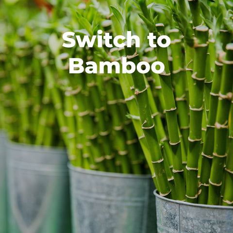 Switch to bamboo
