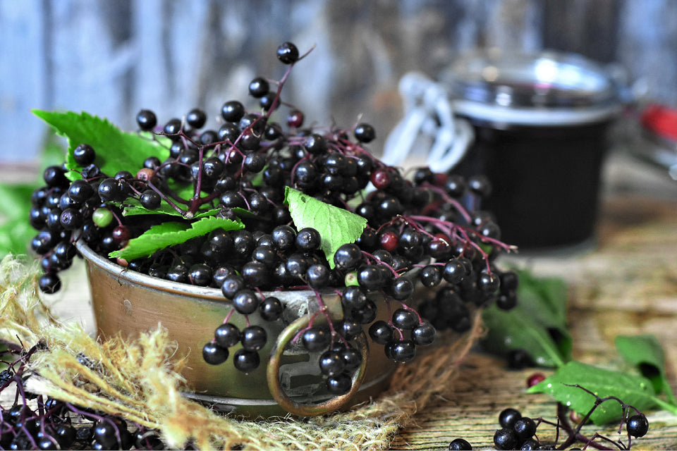 A bowl of elderberries which have many health properties