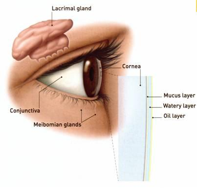 Dry Eye Syndrome - Management and Treatments
