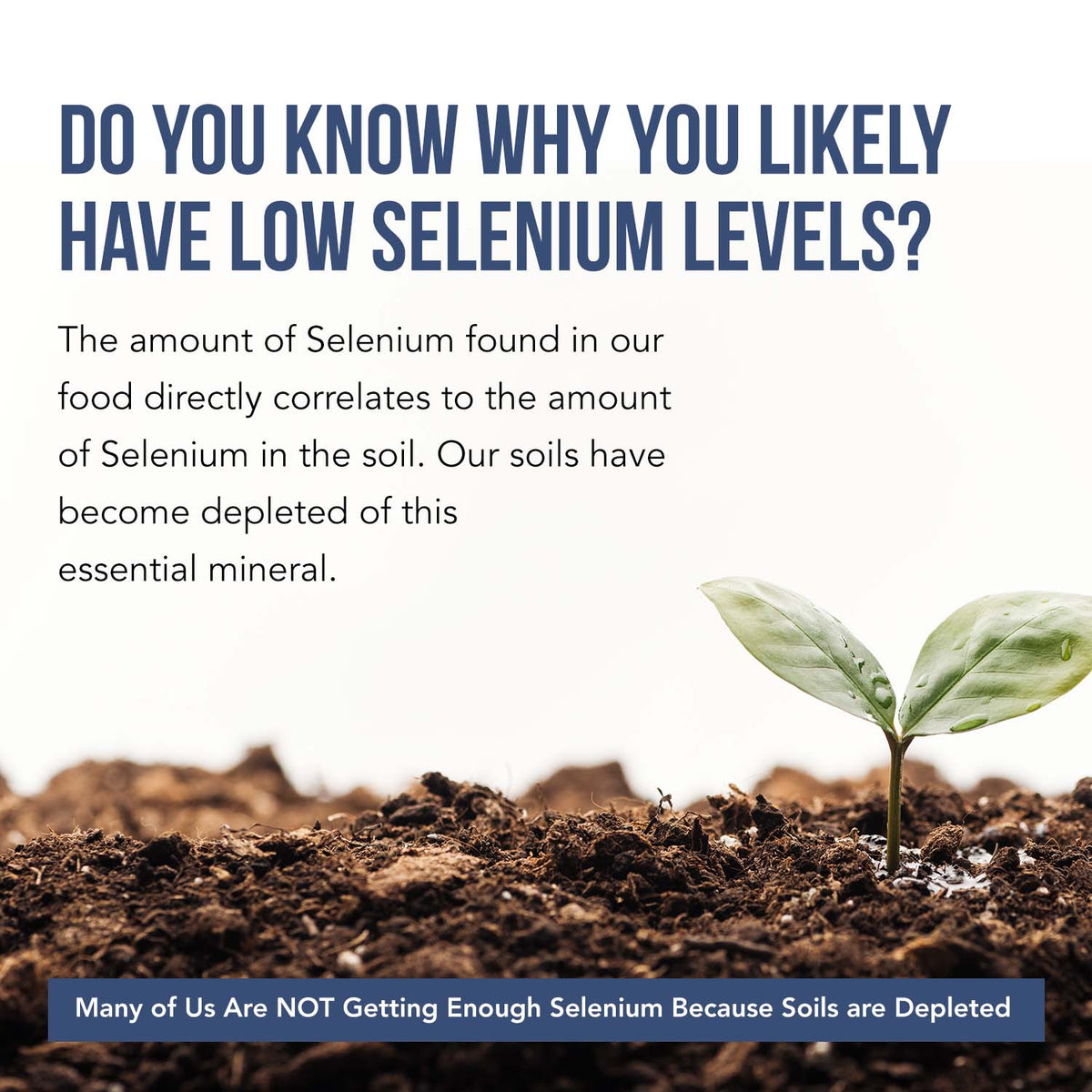 Selenium Liquid Concentrate (L-selenomethionine Form)