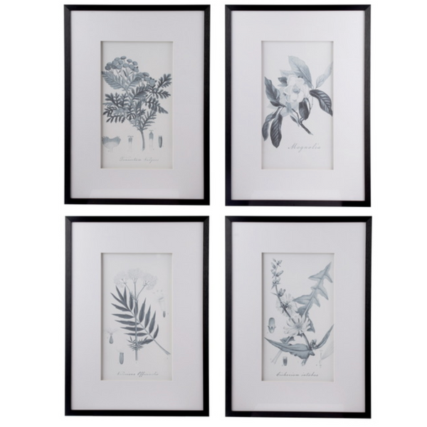 Set of 4 Flora & Fauna Framed Prints - The Home Accessories Company