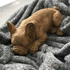 Frenchie Sleeping - Gold - The Home Accessories Company 2