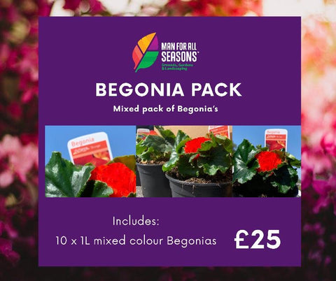 NEW 1 Litre pot BEGONIA'S 10 PACK