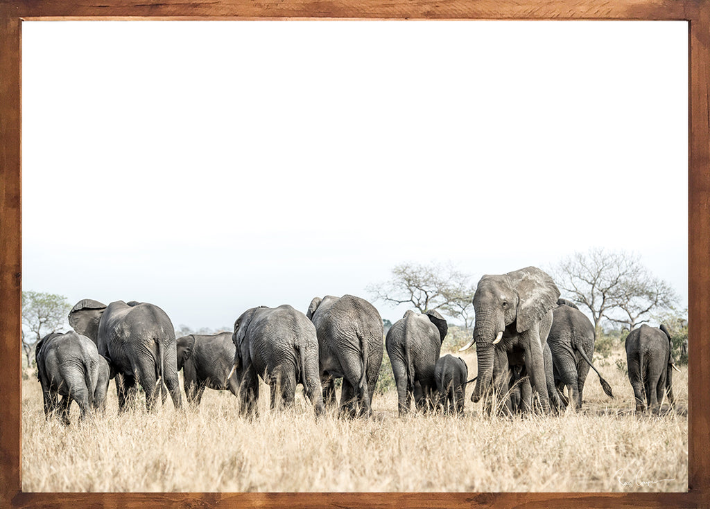 Wildlife photographic art south africa