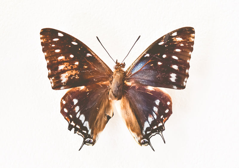 Butterfly artwork africa online