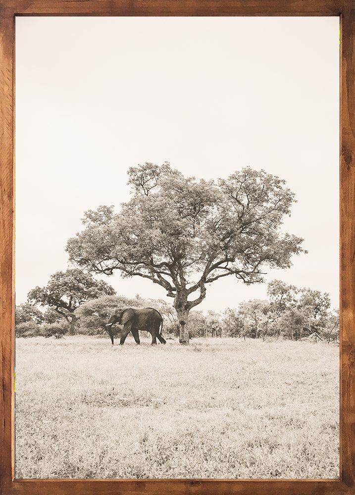 The elephant and the tree