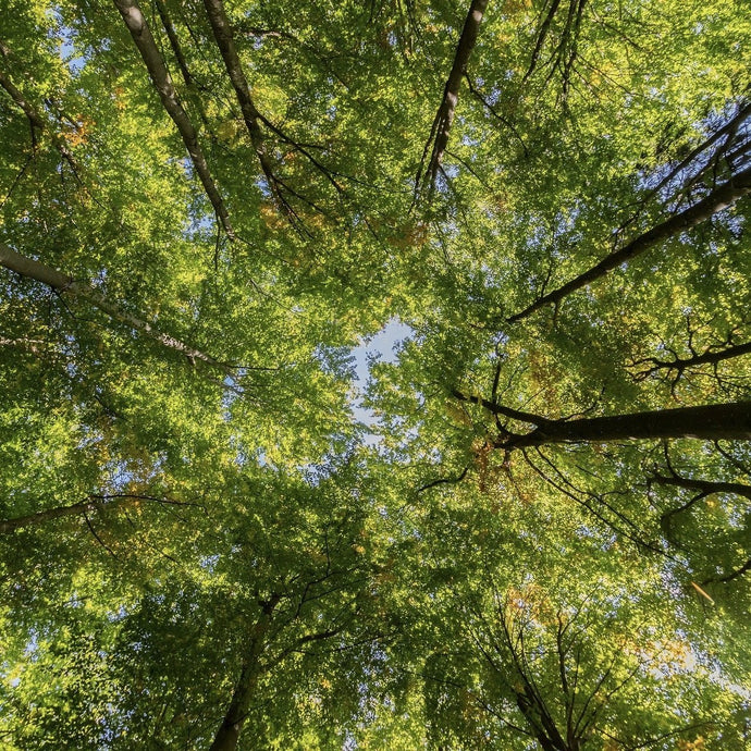 How do trees help our eco-system?