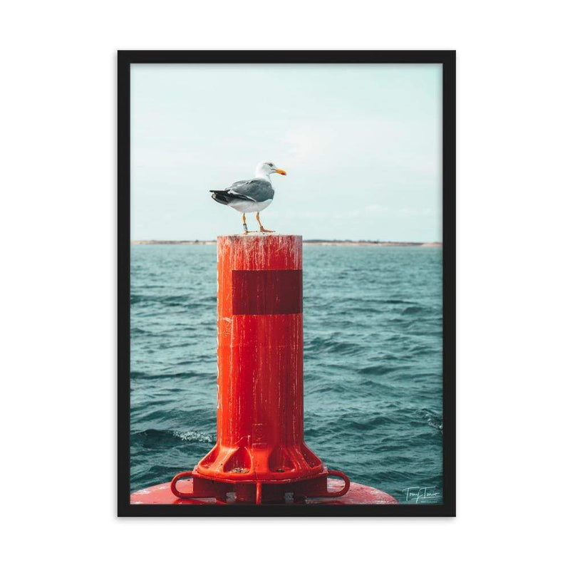 ILE DE RE 0783 TOMY TONIO Photographie Tableau Poster