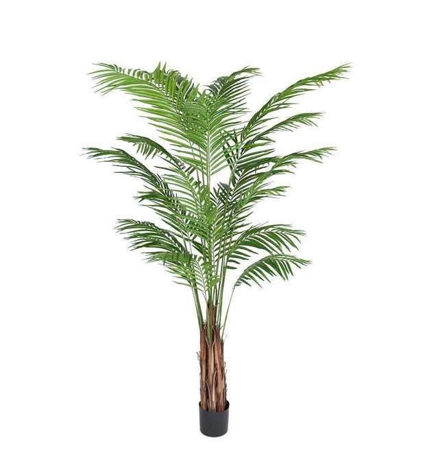 Mr Plant Areca palm 210 cm - Interior 55
