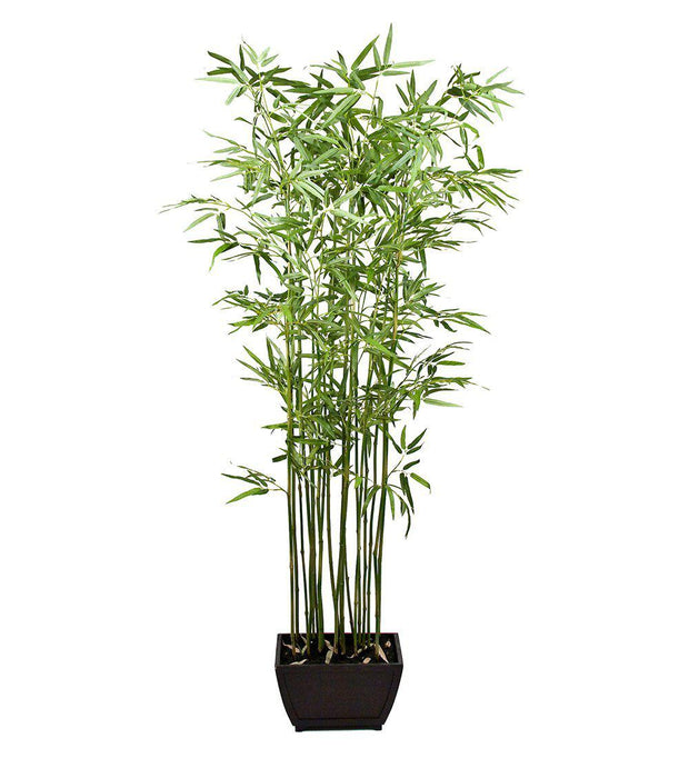 Mr Plant Bambu 190 cm - Interior 55
