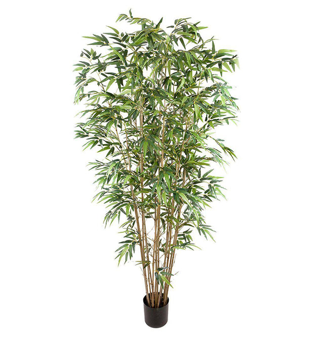 Mr Plant Bambu 210 cm - Interior 55