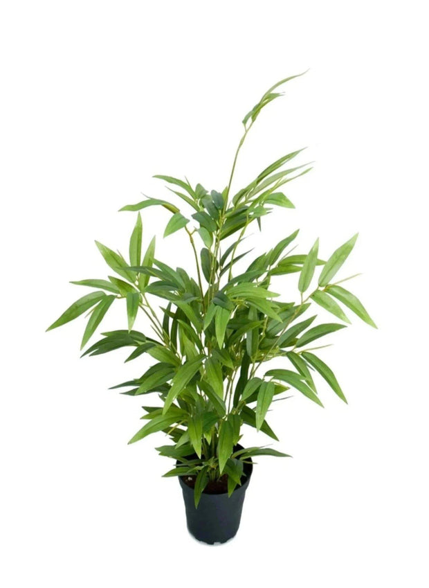 Mr Plant Bambu 45 cm - Interior 55