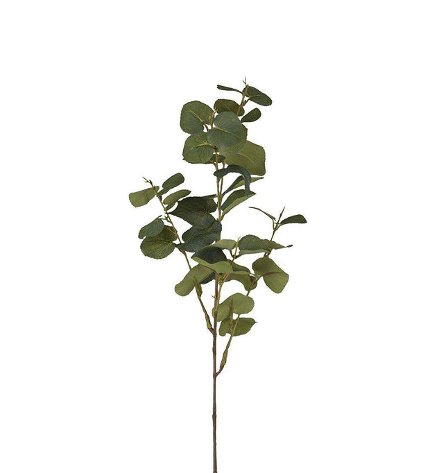 Mr Plant Eucalyptus 70 cm - Interior 55