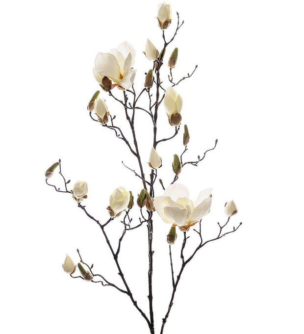 Mr Plant Magnolia 110 cm - Interior 55