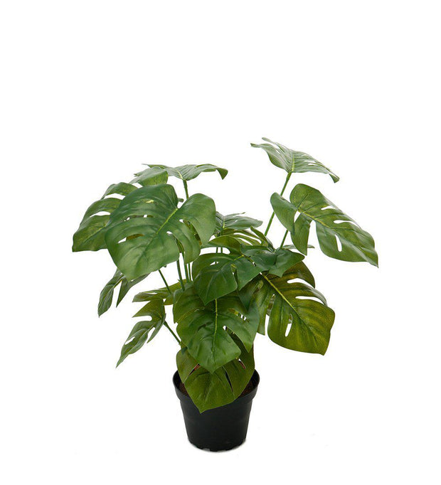 Mr Plant Monstera 30 cm - Interior 55