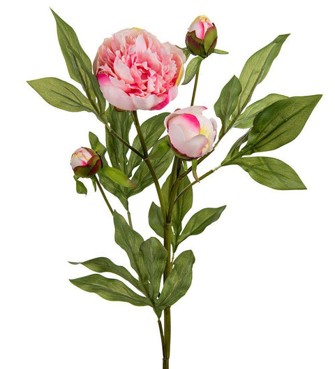 Mr Plant Pion rosa 65 cm - Interior 55