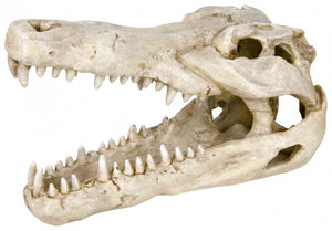 Trixie Crocodile Skull