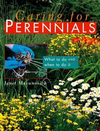 Caring for Perennials