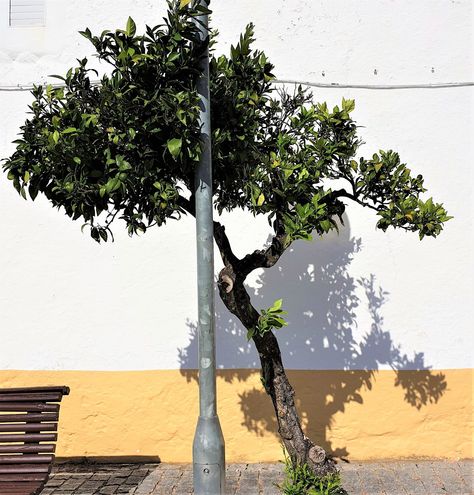 a green, leafy tree growing towards a street lamp casting a shadow on a sunlit whitewashed and painted orangewall kuloko