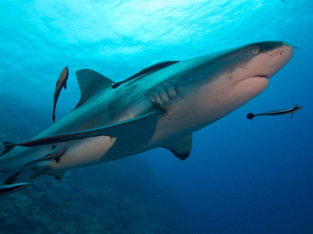 Sharks contaminated with plastic are 'cause for concern'