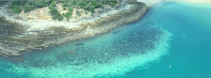 Schmidt Fine Art Gallery Conservation:  Third Massive Coral Bleaching of the Great Barrier Reef in 5 years