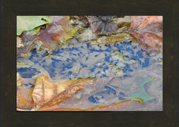 A sea of tadpoles by Lowe in an 10 x 15 print Framed - Schmidt Fine Art Gallery
