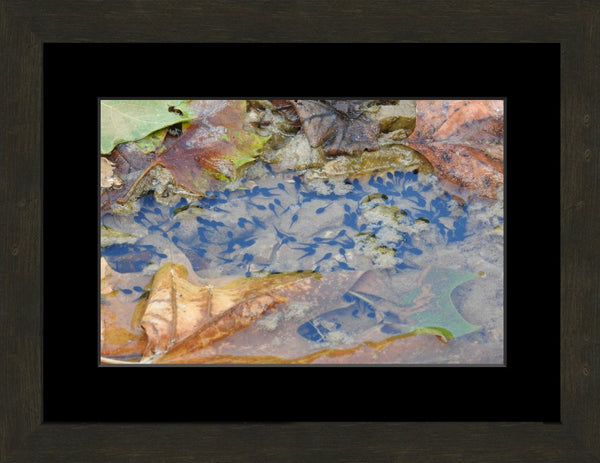 A sea of tadpoles by Lowe in an 10 x 15 print Framed with mat - Schmidt Fine Art Gallery