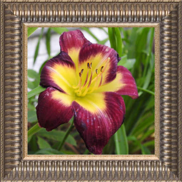 A Special Flower for that Special Someone by Lowe in a 8 x 8 Print Framed in Ribbed Pewter - Schmidt Fine Art Gallery