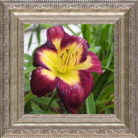 A Special Flower for that Special Someone in a 8 x 8 Print Framed in a Silver Ornate Frame - Schmidt Fine Art Gallery