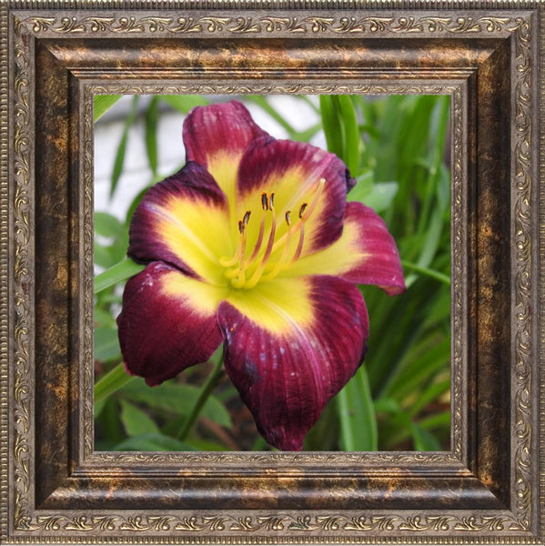 A Special Flower for that Special Someone in a 8 x 8 Print Framed in a Bronze Ornate Frame - Schmidt Fine Art Gallery