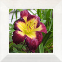 A Special Flower for that Special Someone in a 8 x 8 Print Framed in a Flat White Frame - Schmidt Fine Art Gallery
