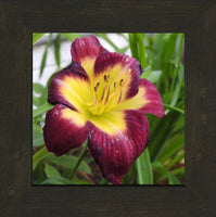 A Special Flower for that Special Someone in a 8 x 8 Print Framed in an Espresso Walnut Frame - Schmidt Fine Art Gallery