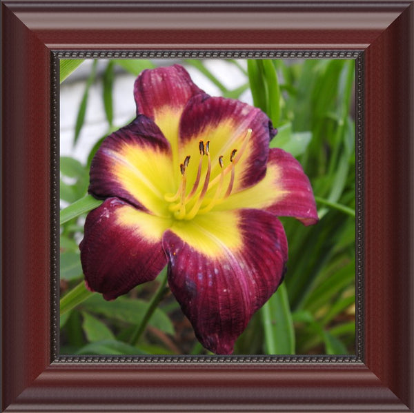 A Special Flower for that Special Someone in a 8 x 8 Print Framed in a Beaded Mahogany - Schmidt Fine Art Gallery